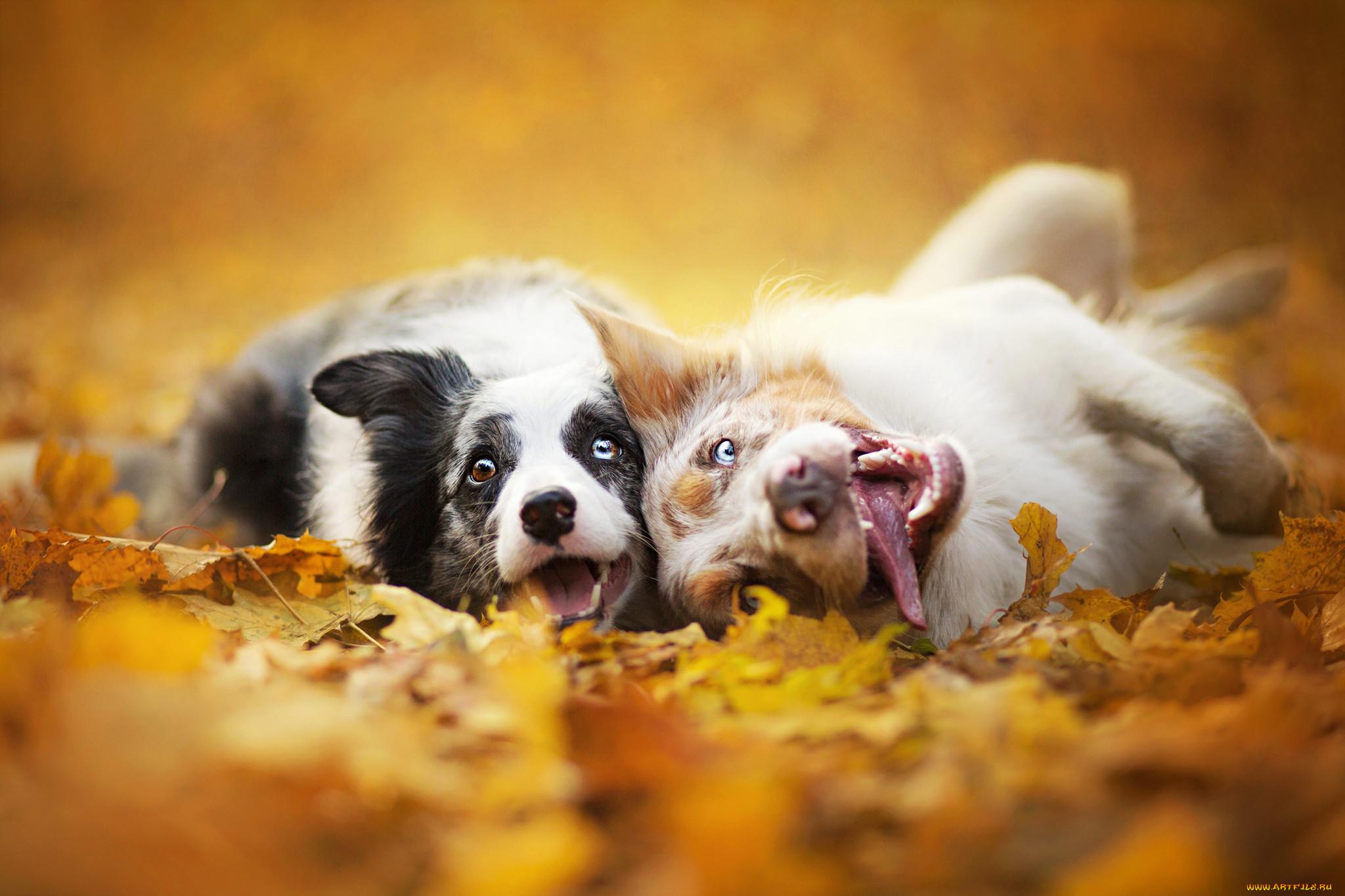разделе картинка осенняя улыбка собаки важно, тепло